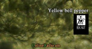 www.onlineradio.am onlineradio.am onlineradio online radio bek art macro studio yellow bell pepper